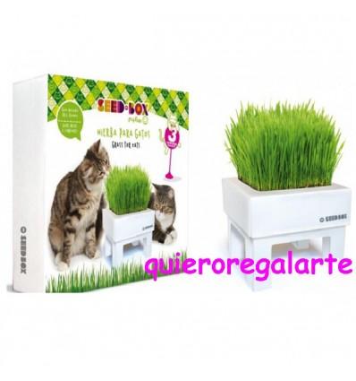 Huerto urbano hierba para gatos